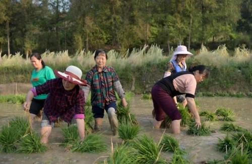 一年四季孰农忙, 园中风蜓与农识。
