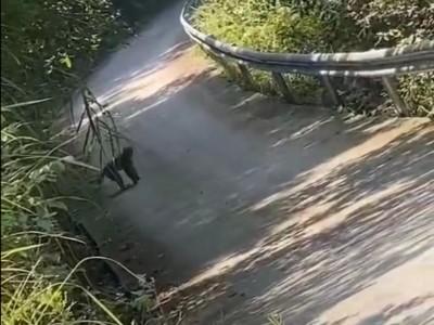 閬中市玉臺鎮轄區連續發現野生猴