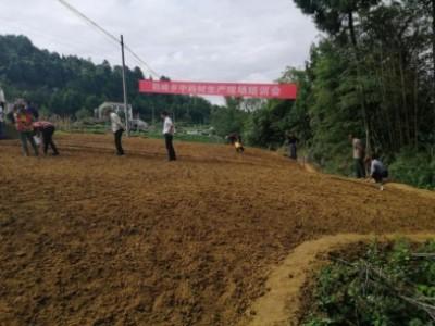 鶴峰鄉大力發展中藥材種植助農增收