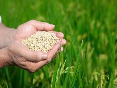 《四川省糧食安全保障條例》頒布并施行