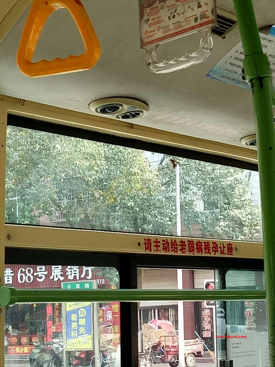 公交车内惊现蜂子